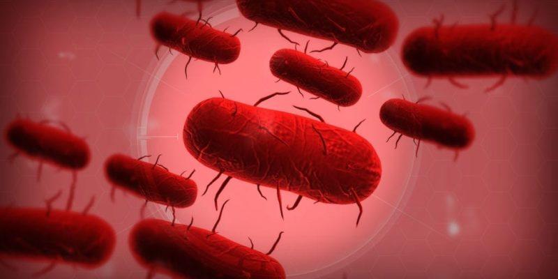 Il nuovo DLC di Plague Inc. vi chiedera' di mantenere una pandemia sotto controllo